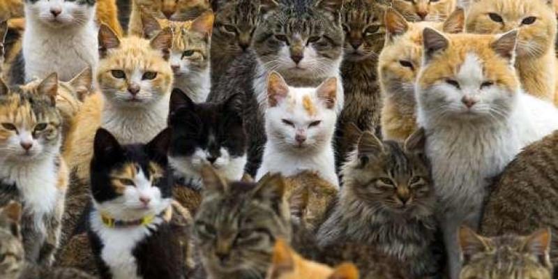 Ilha dos Gatos: