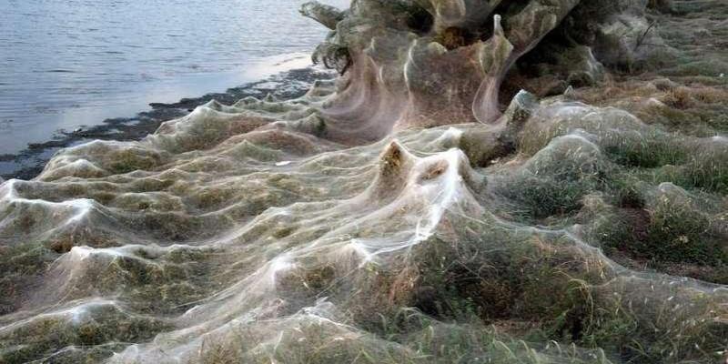 Teia de aranha gigantesca com mais de 300 metros cobre praia na Grécia