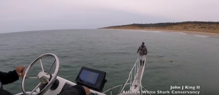 Tubarão ataca biólogo marinho em alto-mar durante pesquisa