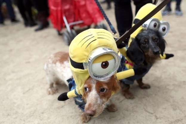 Cachorros também entram no clima de Halloween