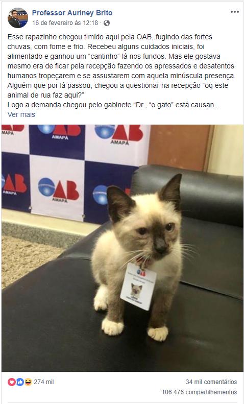 Gatinho é resgatado da rua e se torna funcionário da OAB/AP
