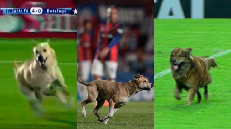 Os cachorros que roubaram a cena em campo