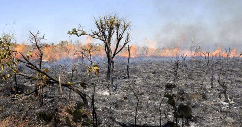 Incêndios florestais em São Paulo dobram em 2020