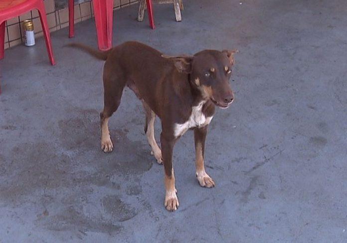 Cachorro sem dono acha carteira com quase R$ 4 mil e devolve