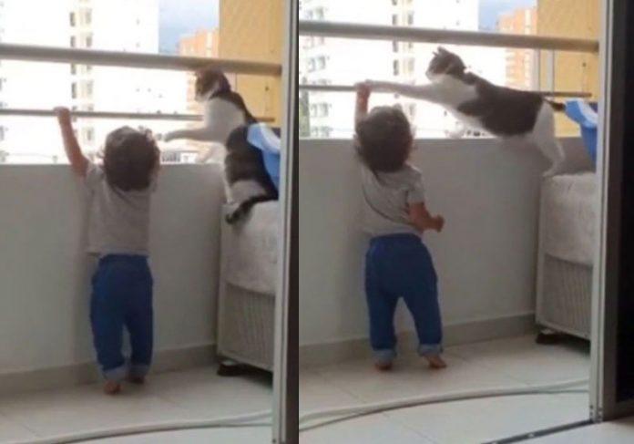 Gato protege criança e não deixa subir na grade do apartamento
