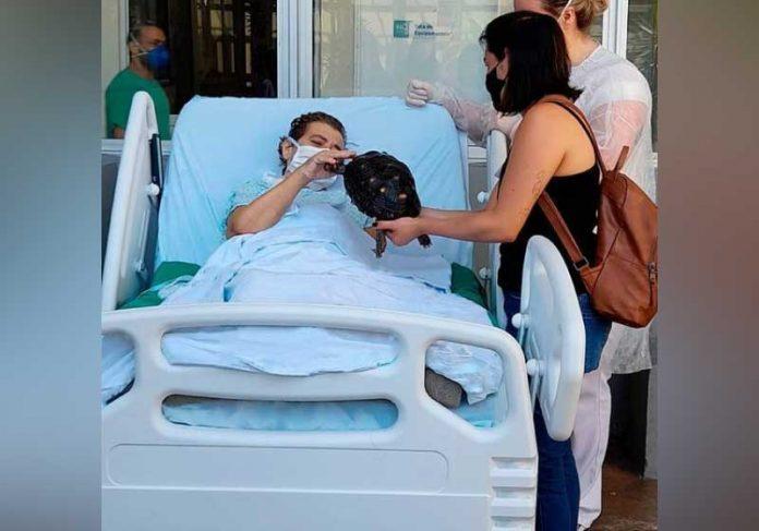 Mulher internada em UTI melhora após visita de jabuti de estimação